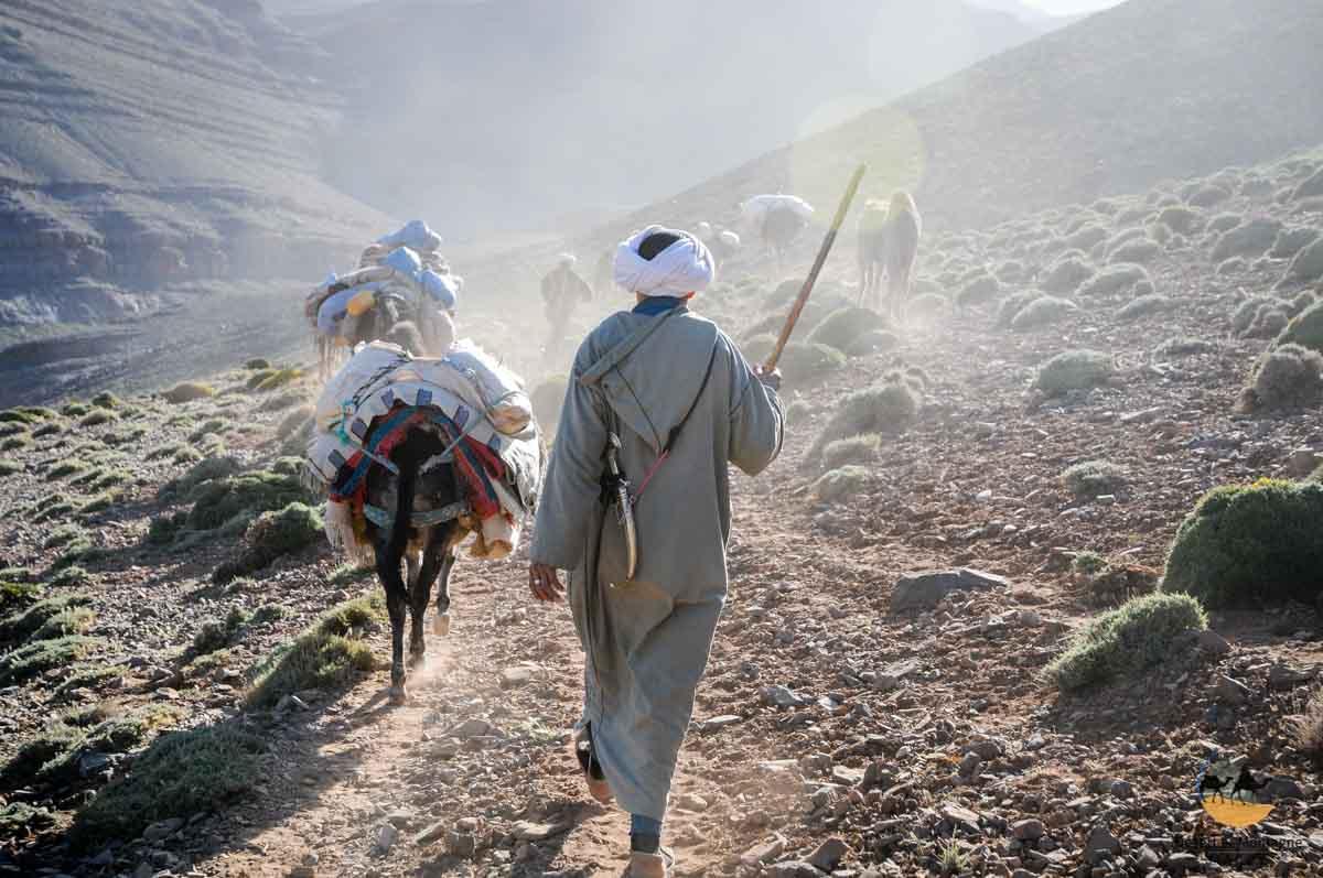 Transhumance noamds Maroc